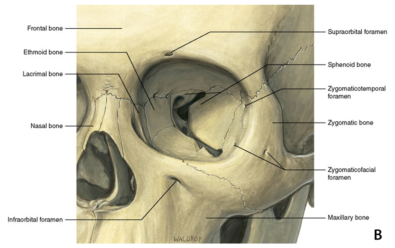 Orbital Compartment Syndrome Curriculum